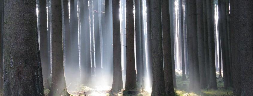 Waldbild Tod und Übergang